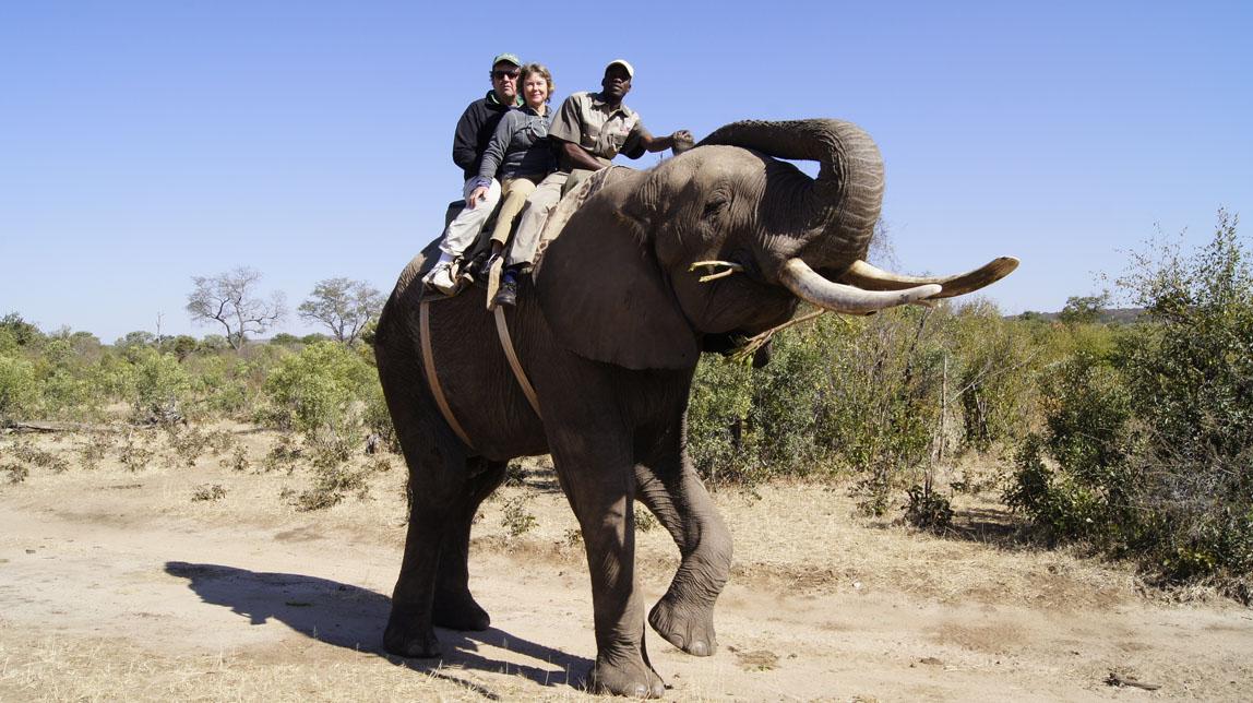 us on elephant