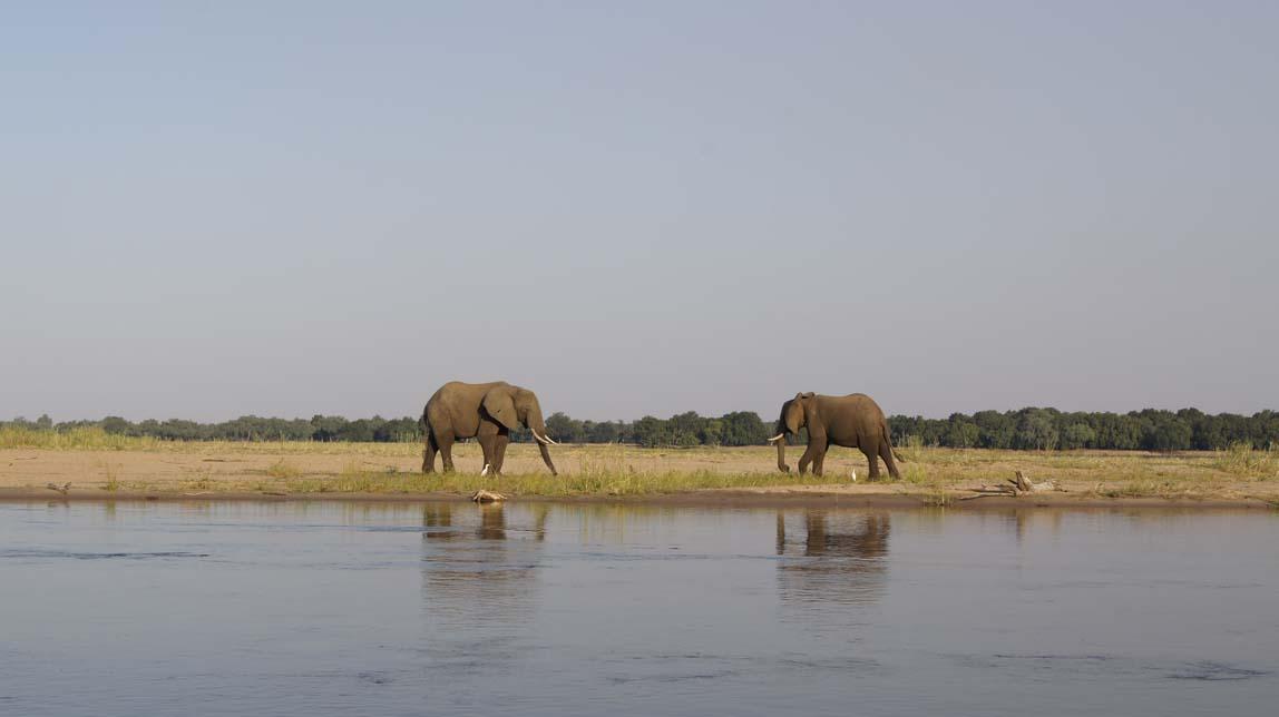 elephants on sandbar