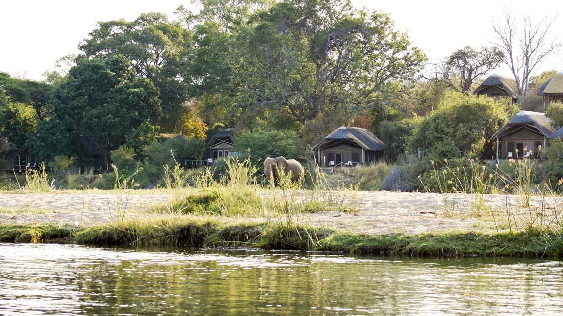 elephants by lodge