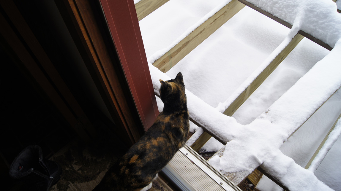 cat looking at the snow