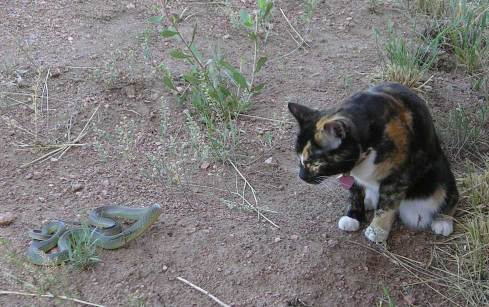 kitty and snake
