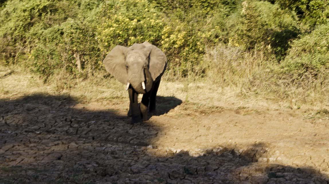 elephant with attitude