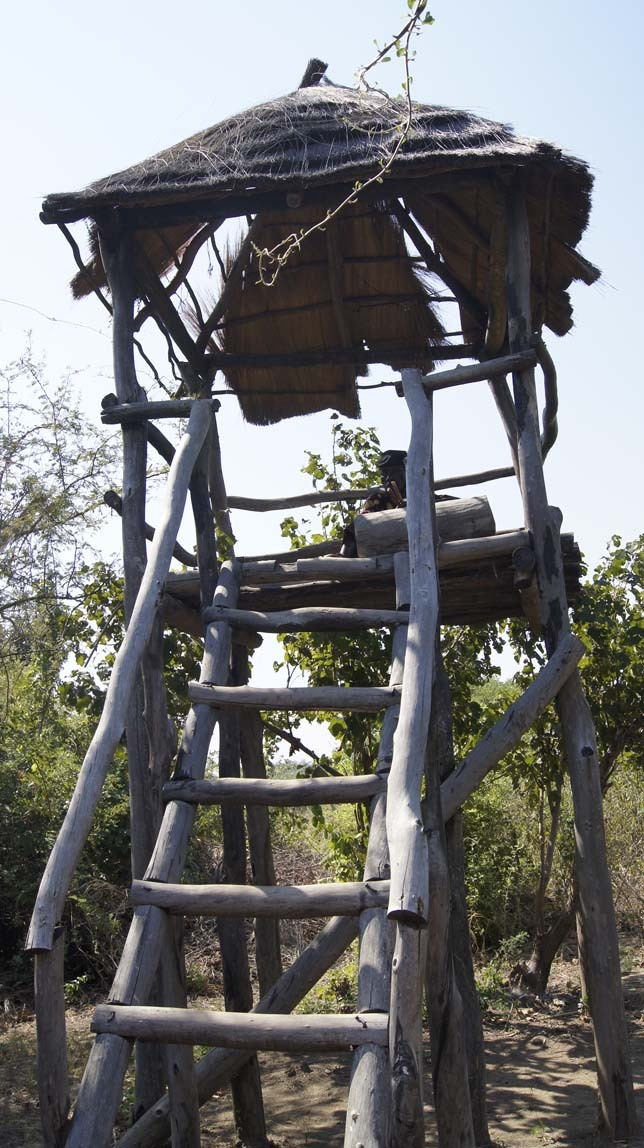 hippo watch tower